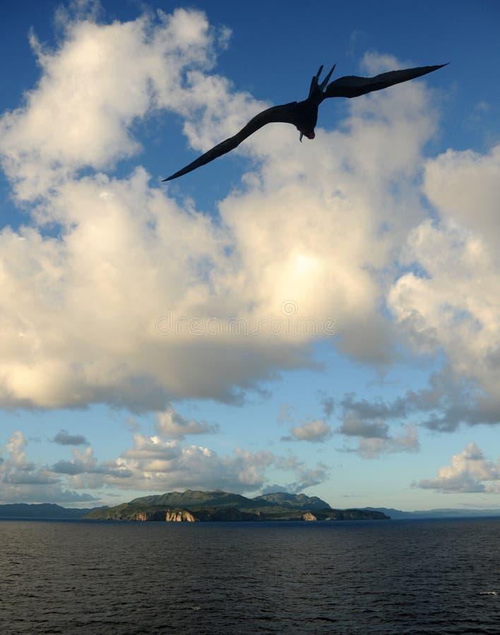 Vogel over eiland royalty-vrije stock foto