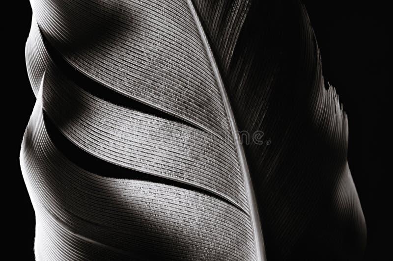 Vogel` s veer, close-up stock afbeeldingen