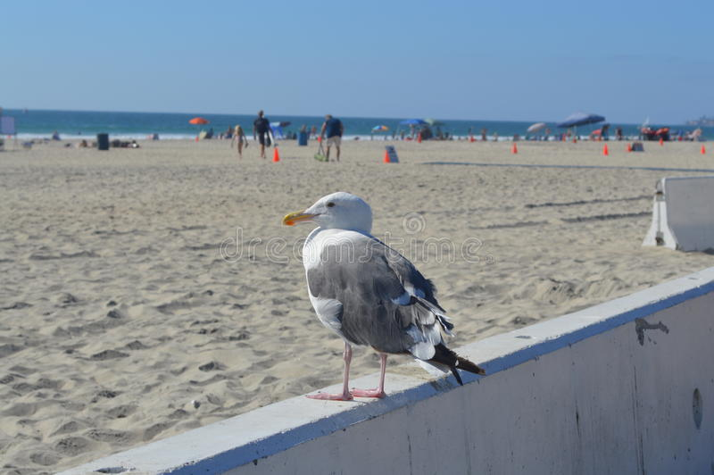 Vogel in San Diego stock afbeelding