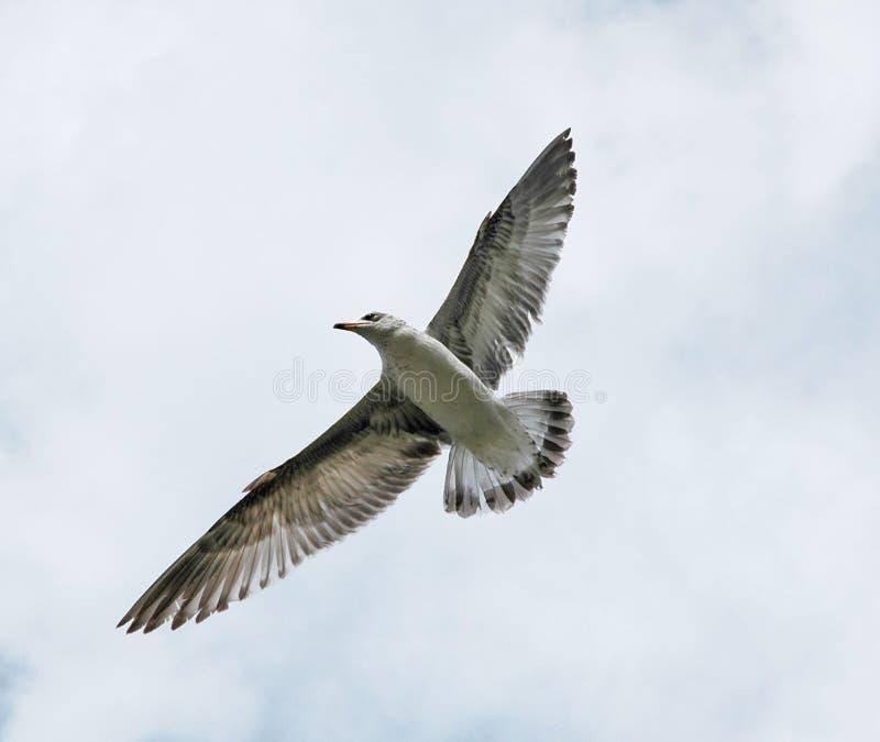 Vogel tijdens de vlucht royalty-vrije stock fotografie