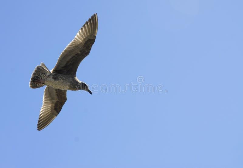 Vogel tijdens de vlucht 2 stock foto's