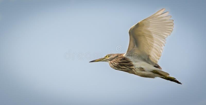 Vogel tijdens de vlucht stock fotografie