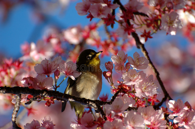 Vogel tussen bloemen royalty-vrije stock fotografie