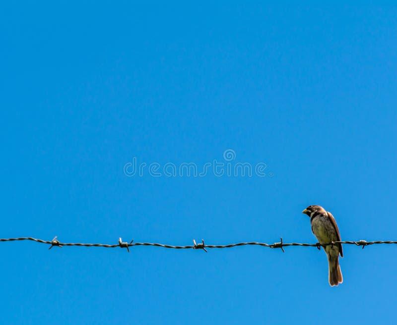 Vogel u. Draht stockfotografie