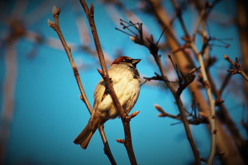 Vogel-Uhr stockbild