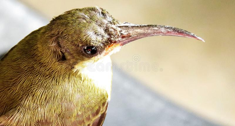 Vogel-Uhr stockfotos