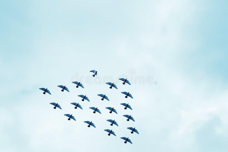 Vogel uit vorming stock illustratie