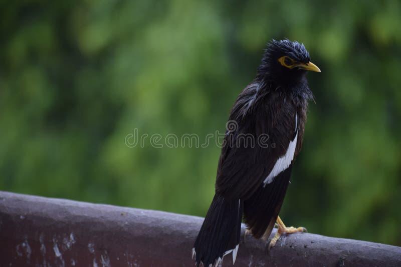 Vogel und das Grün lizenzfreies stockfoto