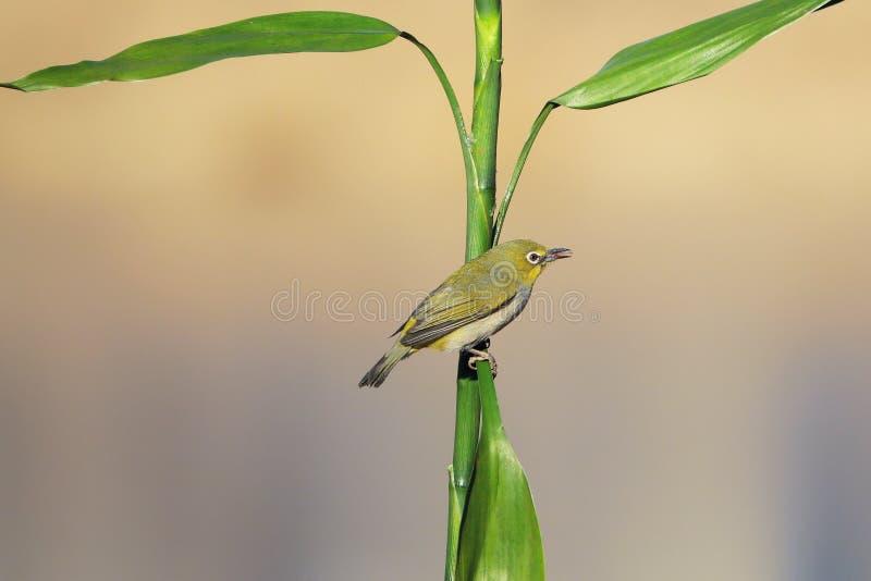 Vogel und Gr?npflanze stockbilder