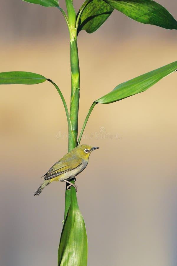 Vogel und Gr?npflanze stockfotografie