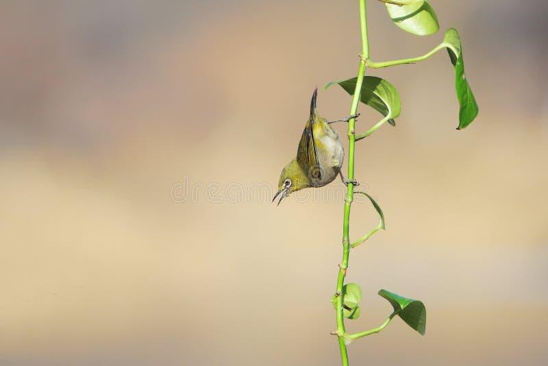 Vogel und Gr?npflanze lizenzfreies stockbild