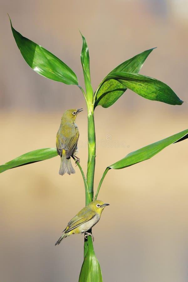 Vogel und Gr?npflanze stockfoto