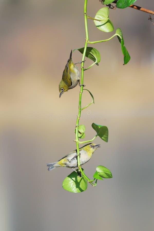 Vogel und Gr?npflanze stockfotos