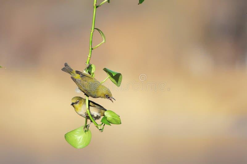 Vogel und Gr?npflanze lizenzfreie stockfotografie