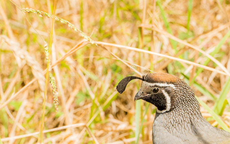 Vogel und Gras lizenzfreies stockbild