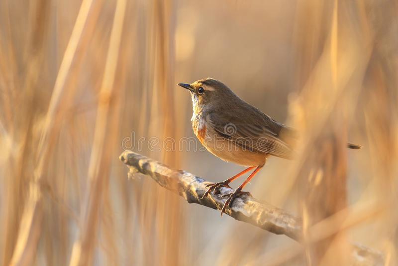 Vogel und schönes sonniges bokeh lizenzfreie stockfotos
