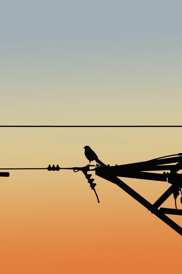 Vogel und Strom lizenzfreies stockbild