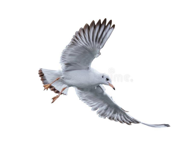 Vogel van de zeemeeuw tijdens de vlucht stock foto