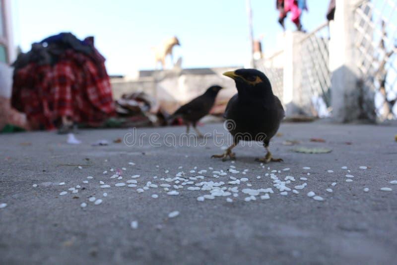 vogel van dorp royalty-vrije stock fotografie