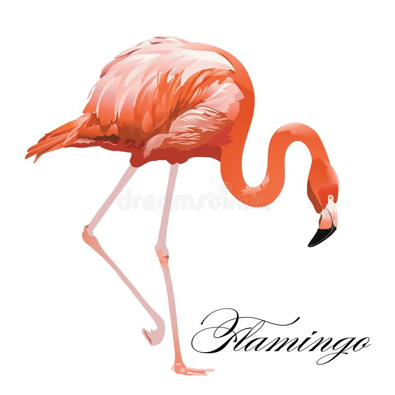 Vogel van het flamingo de tropische exotische koraal Vector geïsoleerde illustratie stock illustratie