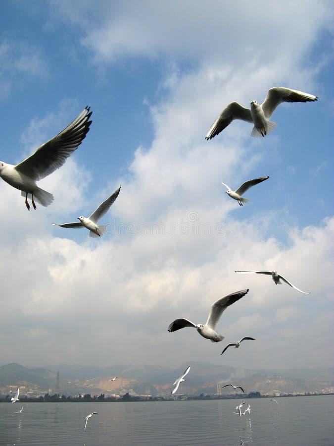 vogel vlucht royalty-vrije stock afbeelding
