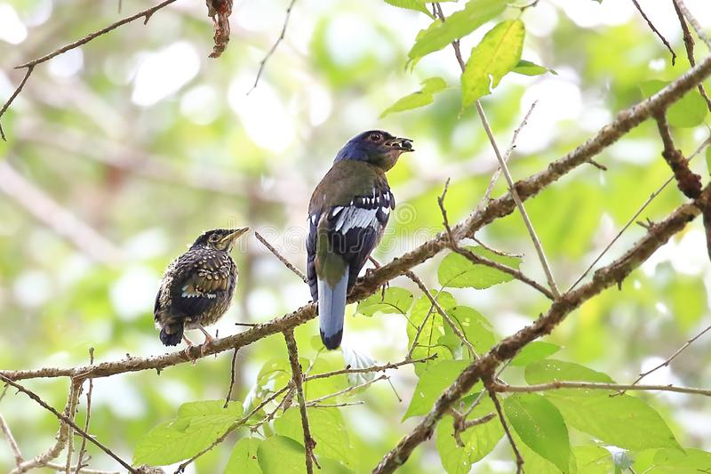 Vogel voedende vogels op de takken royalty-vrije stock foto's