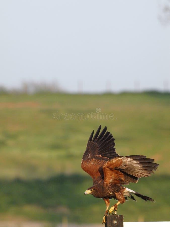 Vogel von beten lizenzfreies stockfoto