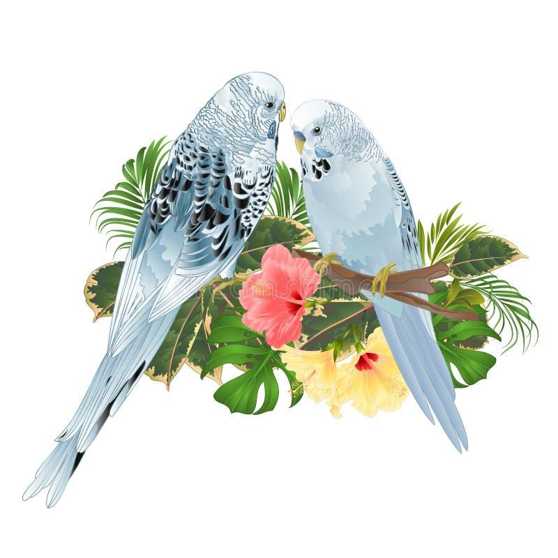 Vogel-Wellensittiche, Haupthaustiere, Blau streichelt Sittiche auf einem Niederlassungsblumenstrauß mit tropischen Blumen Hibiscu vektor abbildung