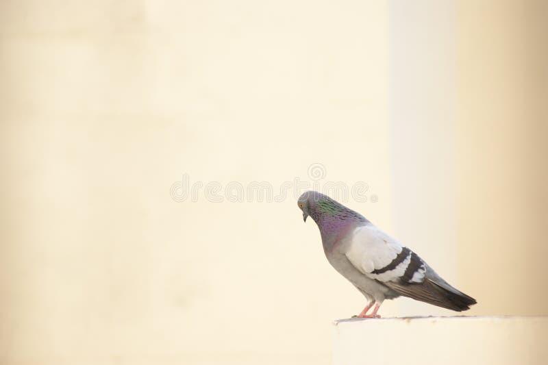 Vogel in wit stock foto's