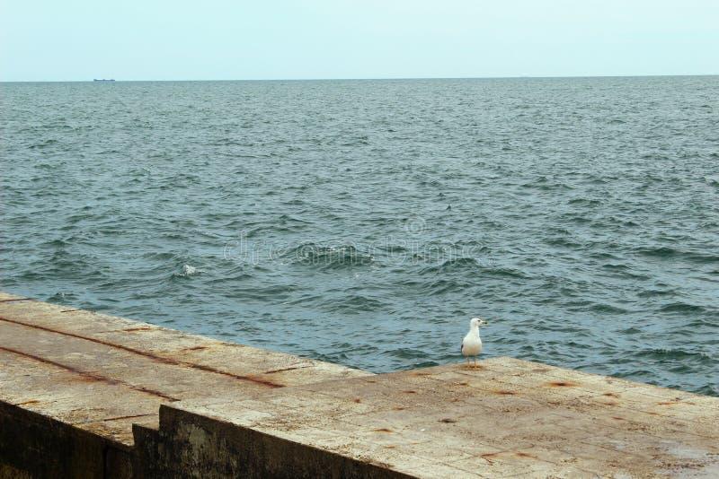 Vogel, Zeemeeuw die op de pijler van beton lopen De kust van de Zwarte Zee, op een bewolkte horizon royalty-vrije stock foto