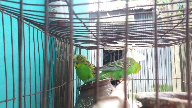 Vogel zwei lizenzfreies stockbild