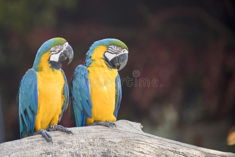 Vogel zwei lizenzfreie stockfotografie