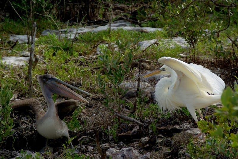 Vogelafstand houden stock foto