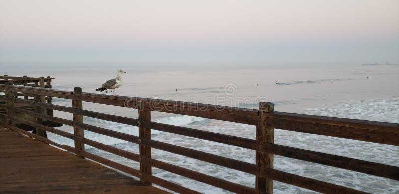 Vogelaufwartung stockfotografie