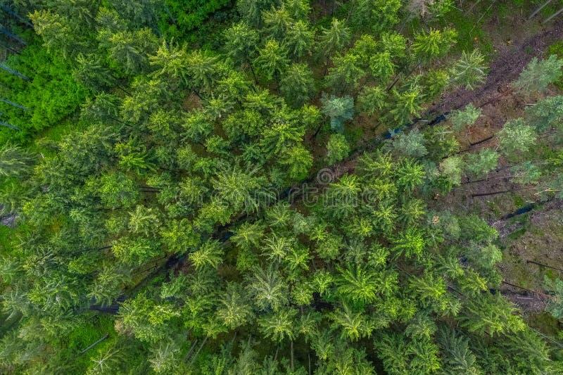Vogelaugenansicht vom Brummen zu einer leeren Stra?e durch den Wald mit hohen B?umen stockfoto
