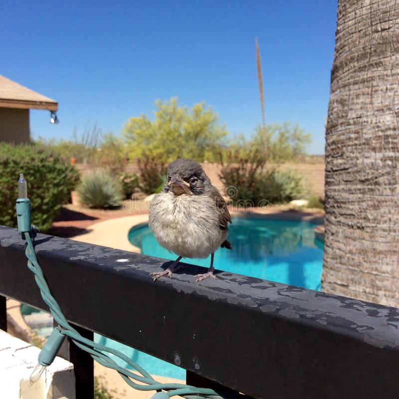 Vogelbaby stockfotos