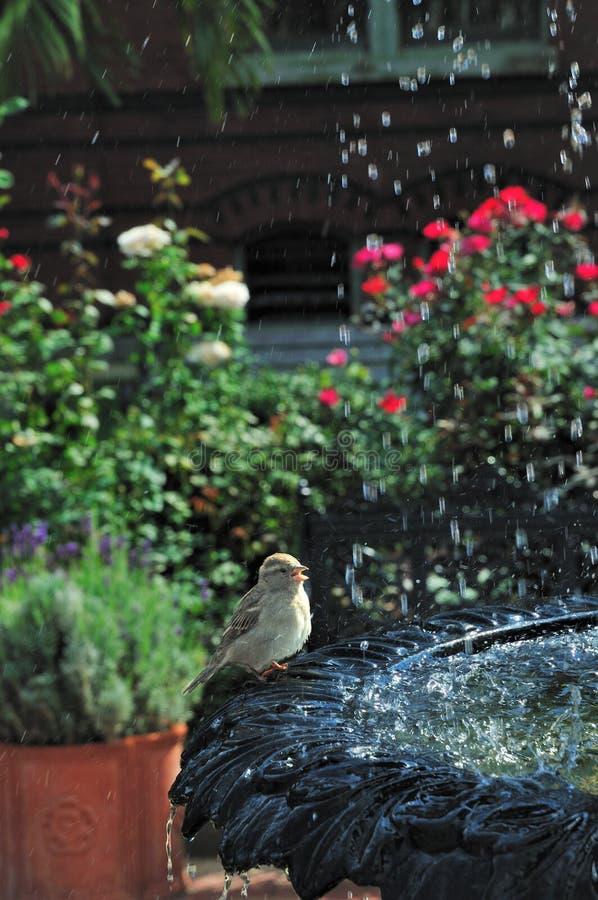 Vogelbad royalty-vrije stock afbeeldingen