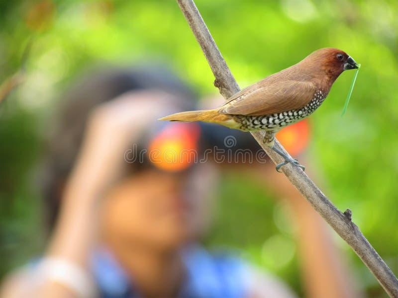 Vogelbeobachtung lizenzfreies stockfoto