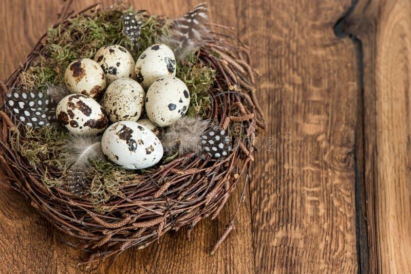 Vogeleier im Nest über hölzernem Hintergrund stockfoto