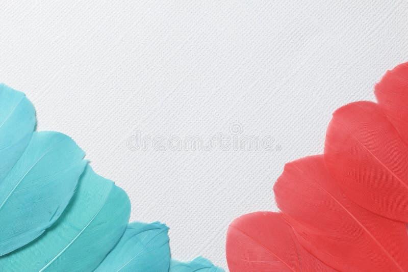 Vogelfedern der Smaragd- und roten Farbe sind auf den linken und rechten Diagonalen des Rahmens lizenzfreies stockbild