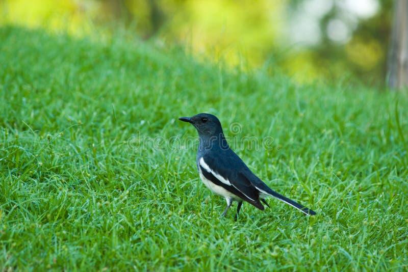 Vogelflüchtiger Blick Auf Lizenzfreies Stockfoto
