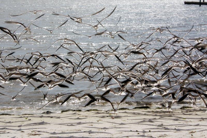Vogelfliegen stockfotografie