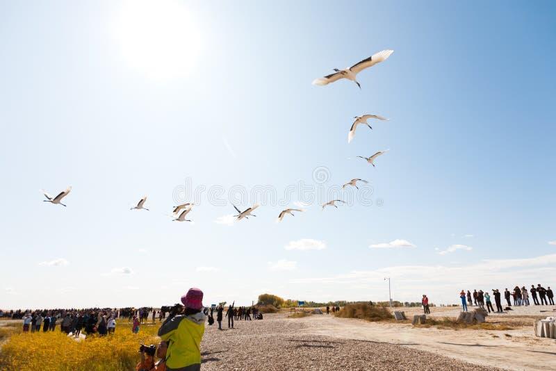 Vogelfliegen lizenzfreies stockfoto