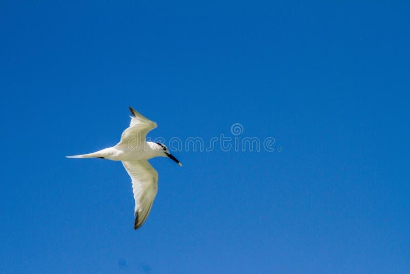 Vogelfliegen stockfotos