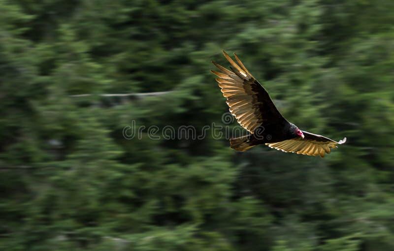 Vogelfliegen durch die Bäume lizenzfreies stockfoto