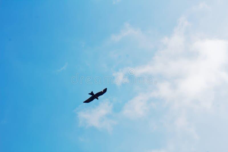 Vogelfliegen, hochfliegend im Himmel lizenzfreie stockfotografie