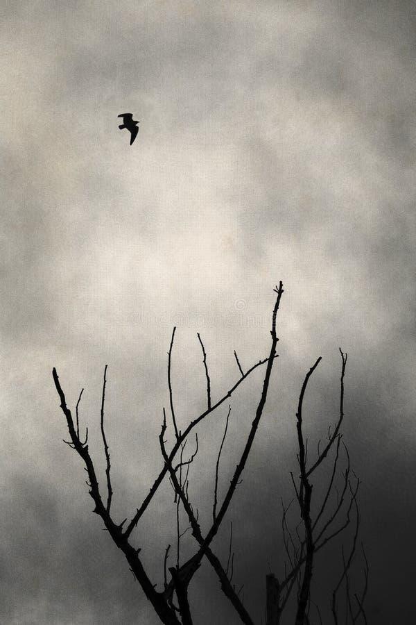 Vogelfliegen im Schattenbild unter toten Zweigen lizenzfreies stockbild