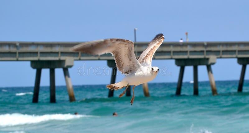Vogelflugwesen über dem Ozean lizenzfreies stockfoto