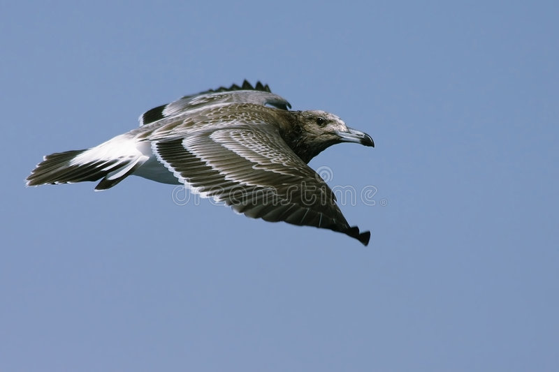Vogelflugwesen stockfoto