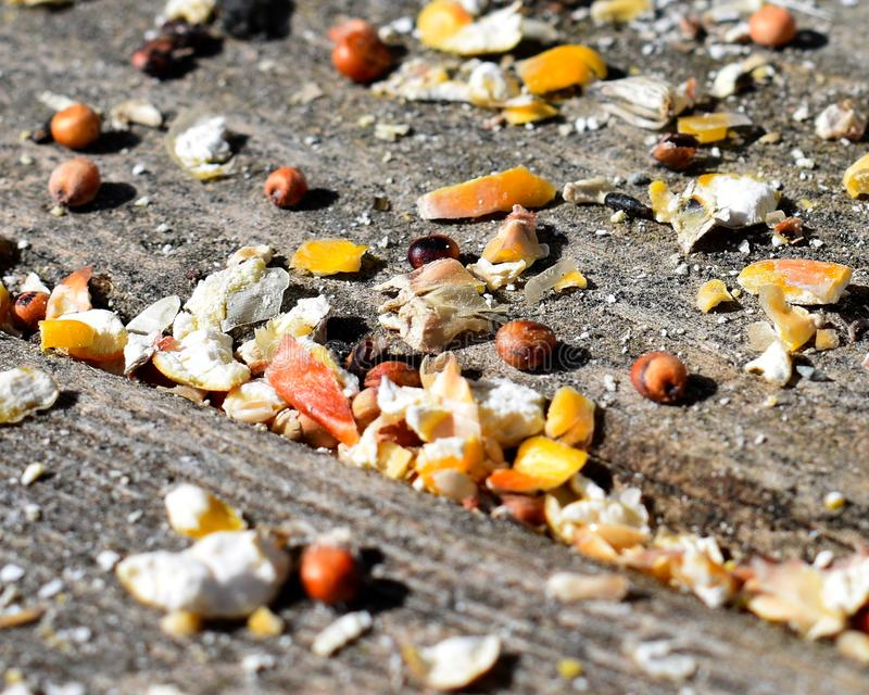 Vogelfutter zerstreut auf Holz stockbild